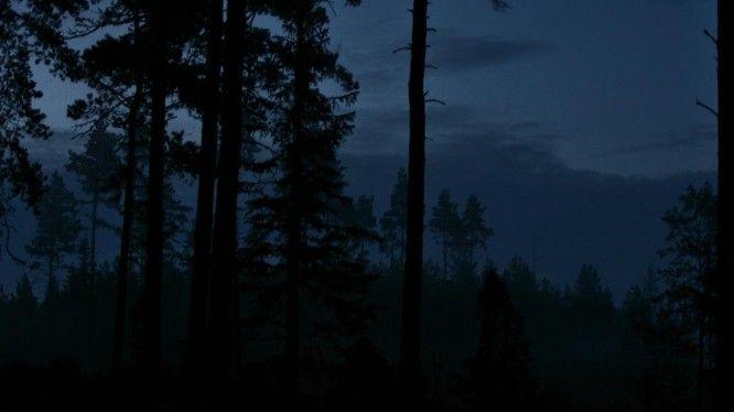 Massivethought_forest